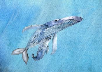Watercolor Whales Clip Art + Print
