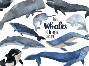 Watercolor Whales Clipart