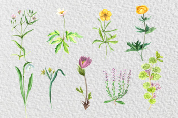 Watercolor Wild Flowers Collection