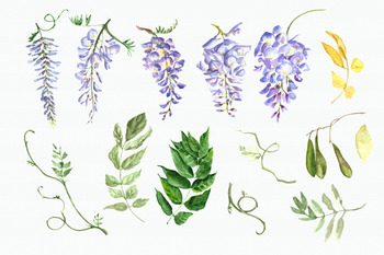 Watercolor Wisteria Clip Art Set