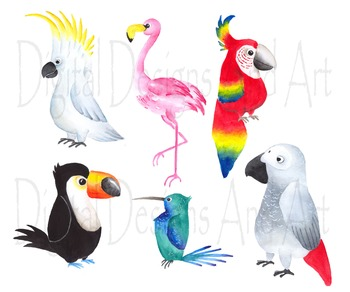 Birds tropical. Watercolor clipart bird
