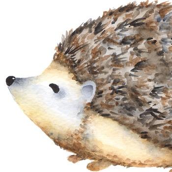 Watercolor hedgehog clipart, porcupine clipart, Forest animal clipar