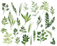 Watercolor herbs, hand painted leaves, foliage, food, basil, cilantro, sage