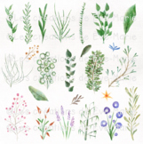 Watercolor plants clipart