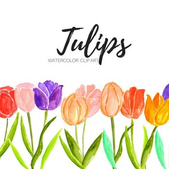 Watercolor tulip flower clipart