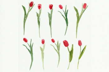 Watercolor tulips clip art, Hand painted tulip flowers, Spring flowers clip arts