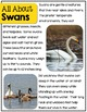 Waterfowl- A Nonfiction Unit