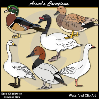 Waterfowl Clip Art