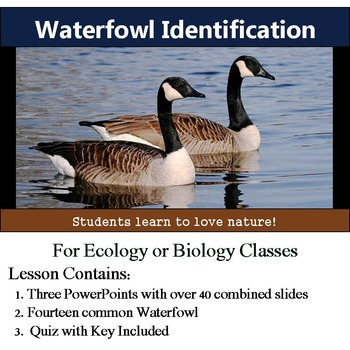 Waterfowl Identification - 13 Common Waterbirds - with assessment