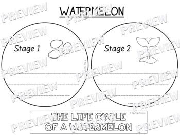 Watermelon Life Cycle Factball Printable Craftivity and Comprehension Sheet
