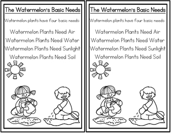 Watermelon Life Cycle