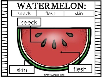 Watermelon Life Cycle