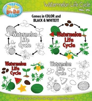 Watermelon Life Cycle Clipart {Zip-A-Dee-Doo-Dah Designs}