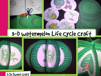 Watermelon Life Cycle Craft: {3-D Plant Life Cycle Craftivity}