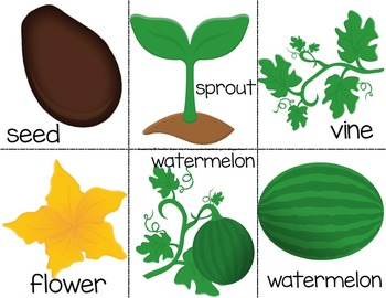 Watermelon Lifecycle Crowns PLUS Sequencing Cards 1809354 on Plant Life Cycle Printable Book