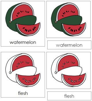 Watermelon Nomenclature Cards