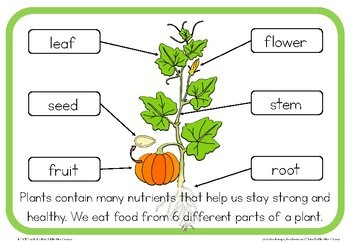 We Eat Different Parts Of A Plant Book By Little Blue Orange Tpt