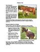 Weaning the Foal Fact Sheet