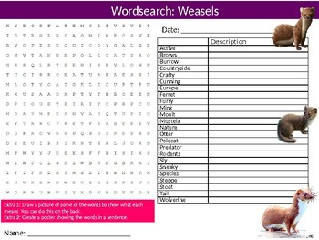 Weasels Wordsearch Puzzle Sheet Keywords Animals Mammals Rodents
