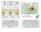 Weather:REAL Forecasting-Upper Air Analysis and Snowstorms