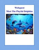 Dolphins -Grades 3-6-Webquest
