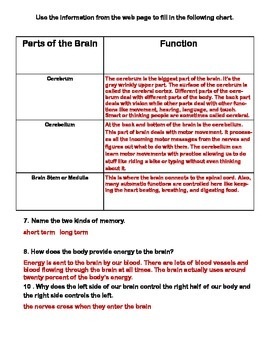 The Brain-Webquest