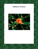 WebQuest -The Amazing Brain
