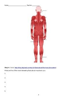 Webquest - Muscle System