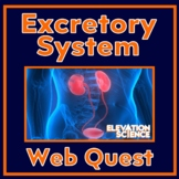 Webquest: Urinary System - the Body Needs Water - Google Doc - distance learning