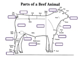 External Parts of a Beef Animal Worksheet