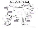 External Parts of a Beef Animal Worksheet