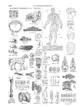 Webster International Dictionary Images