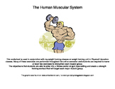 Weight Training Diagram: What exercises build which muscle?