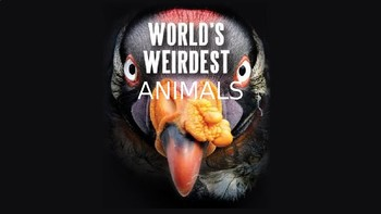 Weird Animals Presentation (for animal adaptations or classification unit)