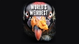 Weird Animals Presentation (for animal adaptations or clas