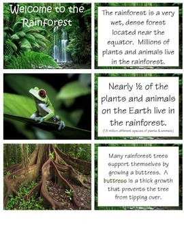 Welcome to the Rainforest - COMPLETE UNIT