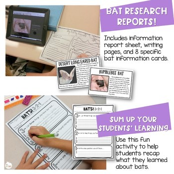 Bat Unit Activities