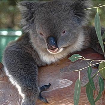 Western Australia Photographs