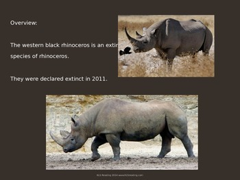 Western Black Rhino - Power Point Information Facts Pictures - Endangered
