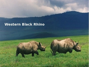 Western Black Rhino - Power Point Information Facts Pictur