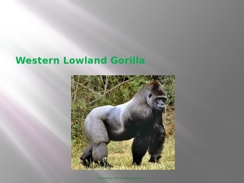 Western Lowland Gorilla - Power Point - Information Facts