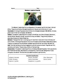 Western Lowland Gorilla - review article facts info questions vocab word search