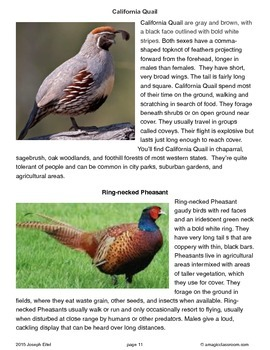 Western States Bird Lesson and Bird Prediction Trick