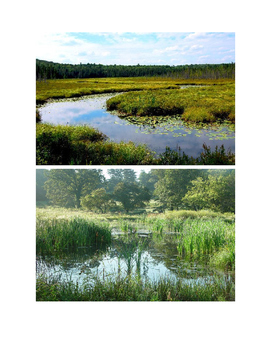 Wetland Biome Teacher's Resource Guide & Pictures