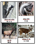 Wetland Forest Desert Animal Cards- CHINESE immersion