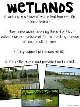 Wetland Poster Pack