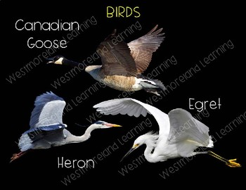 Wetlands Animals Clip Art Habitat Biome Real Clips Photo & Artistic
