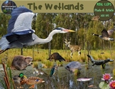 Wetlands Animals Clip Art Habitat Biome Real Clips Photo &