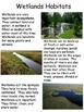 Wetlands Animals- Nonfiction Close Read Unit- Differentiat