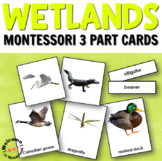 Wetlands Habitat 3 Part Cards
